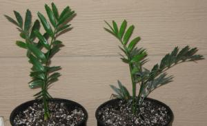 seedlings 011.JPG